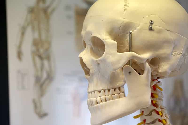 North Yorkshire Physiotherapy, Stokesley, Skeleton